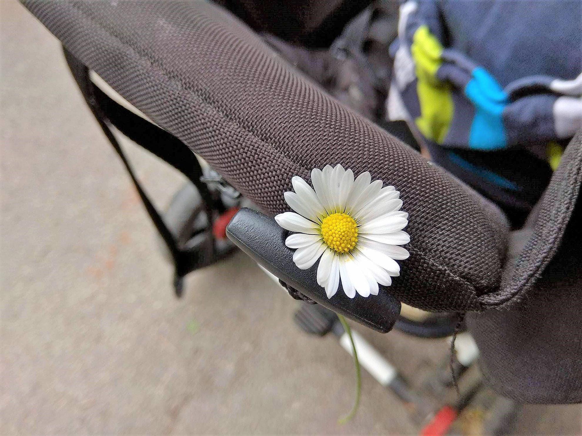 Das 12 von 12 im Mai 2018 bei Julie von Puddingklecks findet im Barfußpark Bad Wörishofen statt und zeigt ihre Liebe zur Natur. Ein Einblick in das Leben als Gr0ßfamilie