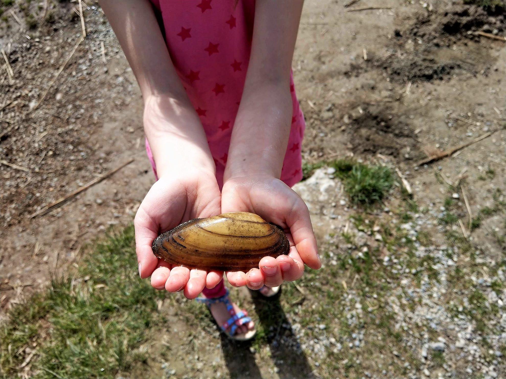 Den Schatz - eine Muschel - in den Händen zu halten, war für die Kinder das Größte beim Ausflug zum Hopfensee im Allgäu.