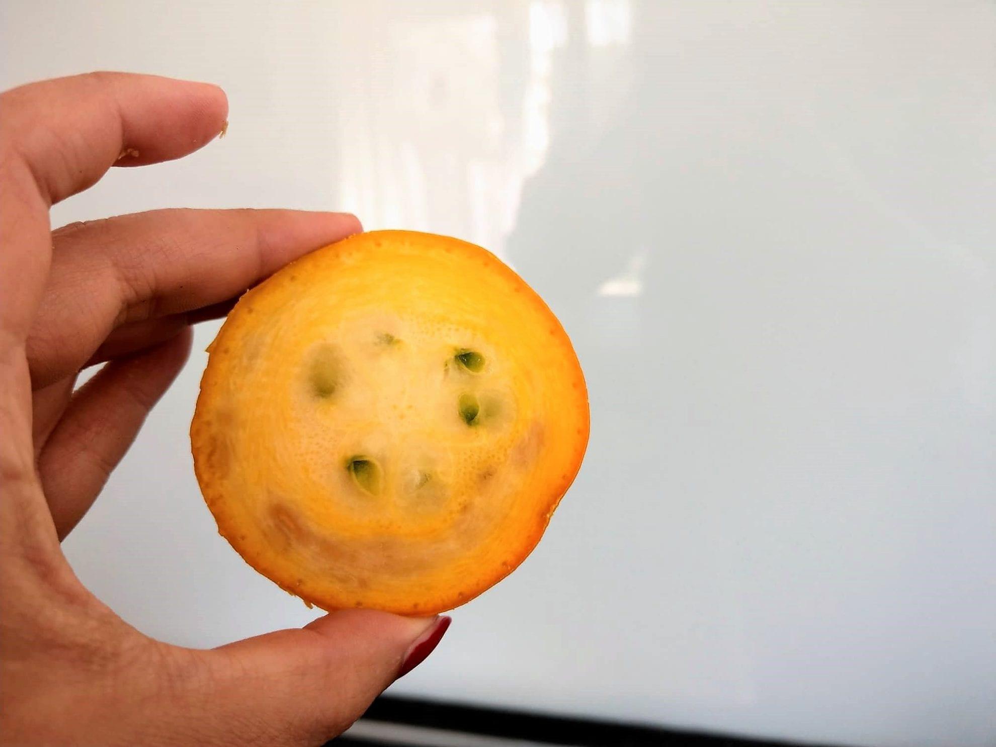 12 von 12 im September 2018, Zucchinischeibe, gelb, Zucchini, Eigenanbau, Gartenliebe, Garten
