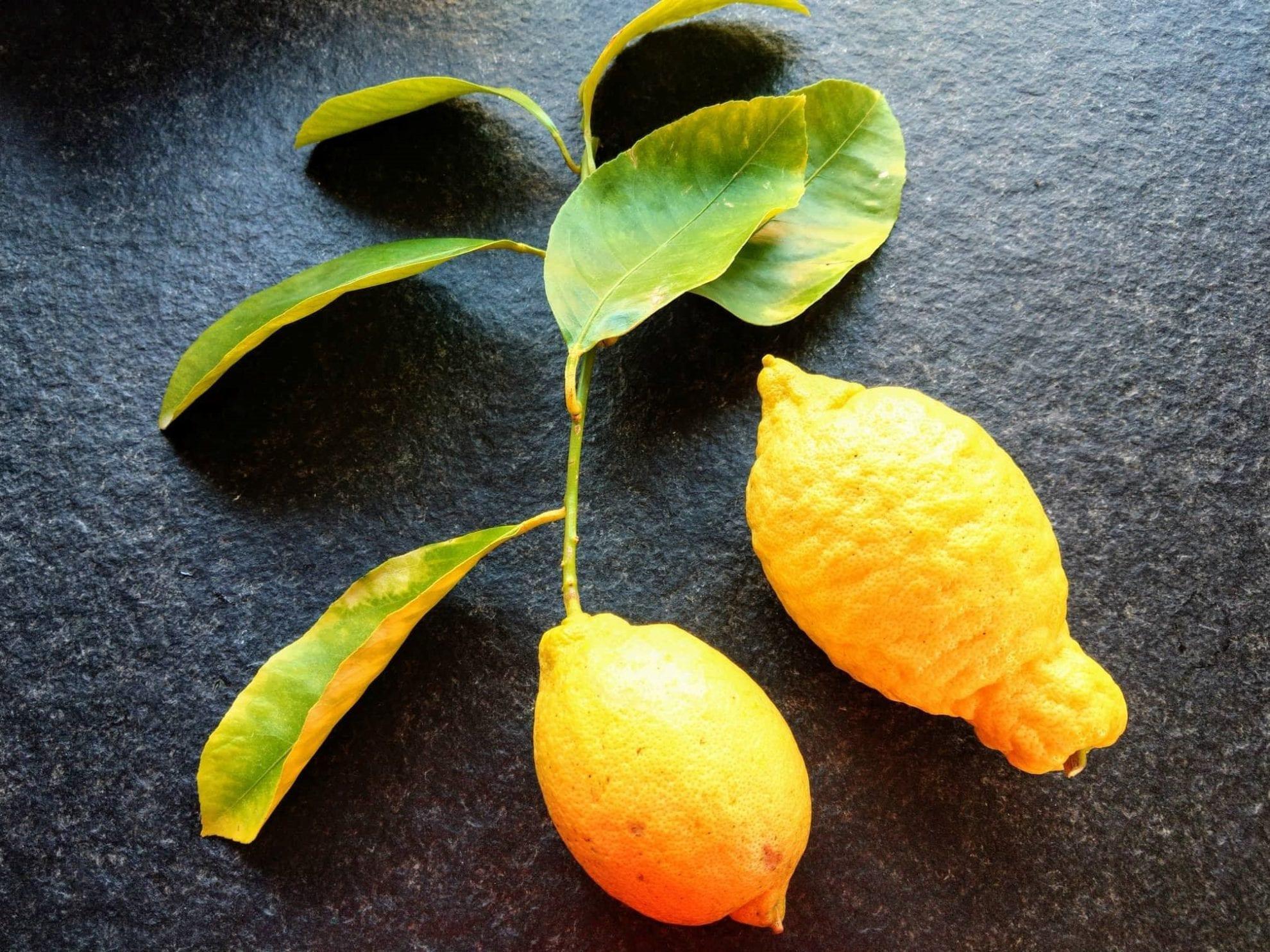 Zitronen aus dem eigenen Anbau der Ziehgrosseltern.